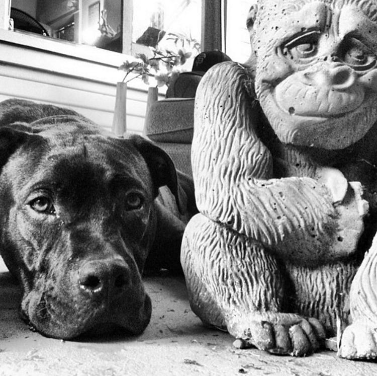 SkinOwl Monkey Pup